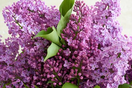 Blumenstrauß aus Flieder auf der Hintergrundwand aus Travertin. Geschmack von Frühlingsblumen.