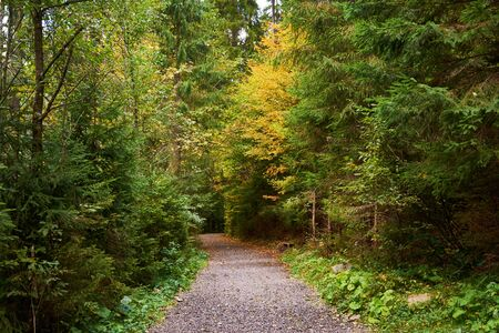 Forest dirt road. Colorful leaves of trees in the autumn forest, colors of leaf-fall. Autumnal forest landscape.