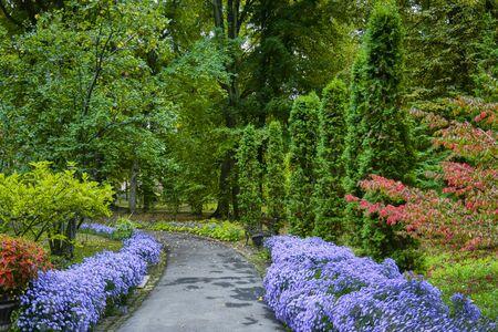 Decorative floral arrangement of lilac chrysanthemum and other flowers in autumn garden, autumn bouquet. Alley in the autumn park. Standard-Bild
