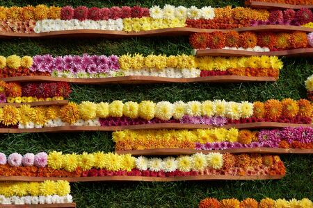 Ornamental wall decorated with colorful flowers of grandiflorum chrysanthemums. Decorative composition of fresh chrysanthemum flowers, autumn bouquet. Multicolored chrysanthemums in autumn Iasi botanical garden, Romania.