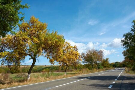 Sunny autumn day and suburban highway. Colorful leaves of trees along the autumn road, colors of leaf-fall. Autumnal landscape. Zdjęcie Seryjne