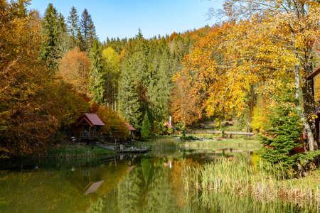 Warm sunny autumn day in a park near Lake Vita, Carpathian mountains, Ukraine. Leaf fall landscape, colors of autumn.