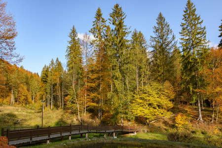 Warm sunny autumn day in a park near Lake Vita, Carpathian mountains, Ukraine. Leaf fall landscape, colors of autumn.
