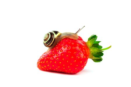 Snail streaking towards red fresh strawberry isolated on white. Selective focus. Modern beauty, alternative medicine or food concept Stock Photo