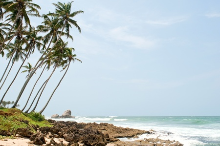 Tropical paradise in Sri Lanka, Tangalle with palms hanging over the beach and ocean photo