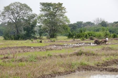 drudgery: Sri Lanka, Sigiriya area - Apr 28, 2011: A man working with a motor plow in a rice field