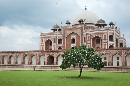 mughal: Flowering tree and Humayuns tomb in Delhi, India as an example of early Mughal architecture