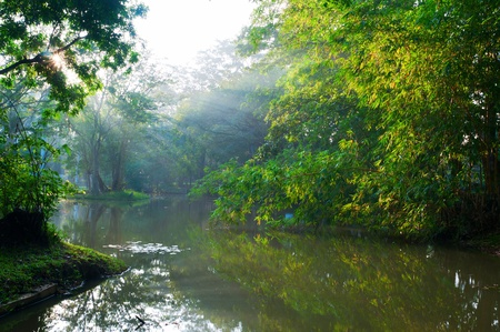 tropical evergreen forest: Mystical lake in forest with morning sunlights