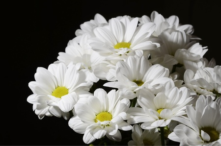 Bouquet of nice white flowers on black background Stock Photo - 13241220