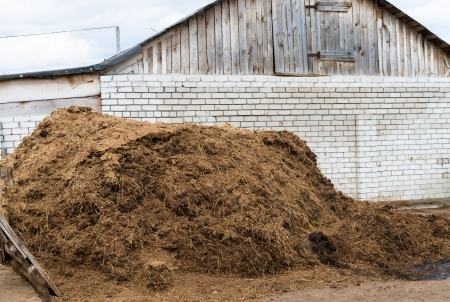 fecal: Heap of cow dung as a natural fertilizer near a farm building