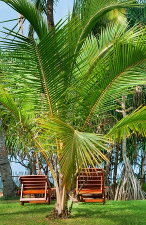 Beach chairs between tropical palms on green grass photo