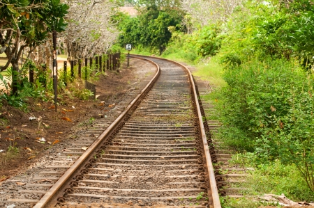 Railway line passing through the green plants  Focus on front  Stock Photo - 14934125