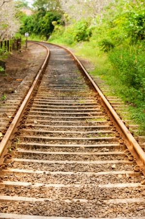 Railway line passing through the green plants Stock Photo - 14934109