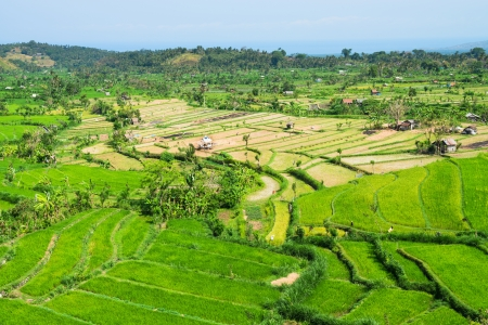 Green rice fields terraces and shacks, Bali, Indonesia Stock Photo - 16385892