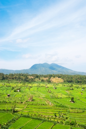 Green rice fields terraces and shacks with Lempuyang volcano on background, Bali, Indonesia  Stock Photo - 16385727