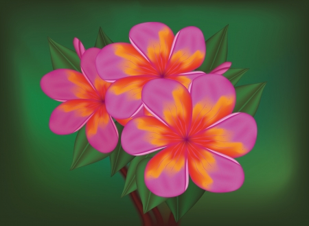 Vector branch of tropical pink flowers frangipani (plumeria) on dark green leaves background. Vector