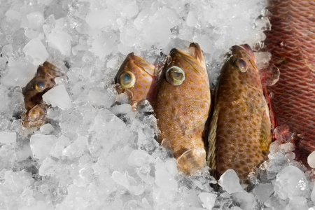 Fresh fish on ice for sale at restaurant photo
