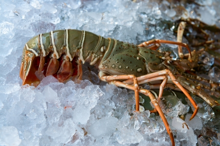 Fresh lobster on ice for sale at restaurant photo