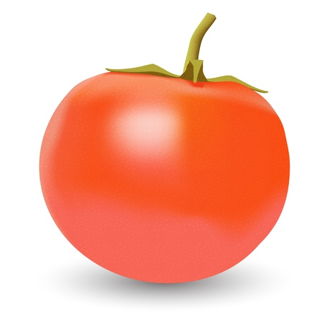 Realistic vector big ripe red fresh tomato on white background Vector