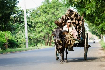 ANURADHAPURA, SRI LANKA - DEC 6: Local man rides bull vintage cart with firewood on Dec 6, 2011 in Anuradhapura, Sri Lanka. Bulls are traditional nature cargo transport in Sri Lanka.