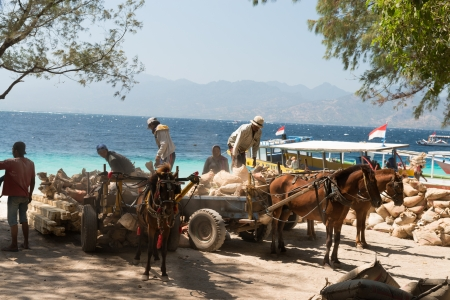 GILI TRAWANGAN, INDONESIA - SEP 15: Cement  loading on horse carriages on Sep 15,2012 in Gili Trawangan island, Indonesia. On the small island there are no any transport but horse carriage.