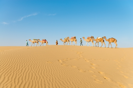 Caravan with bedouins and camels in gold sand dunes in desert at sunset. Thar desert or Great Indian desert. photo
