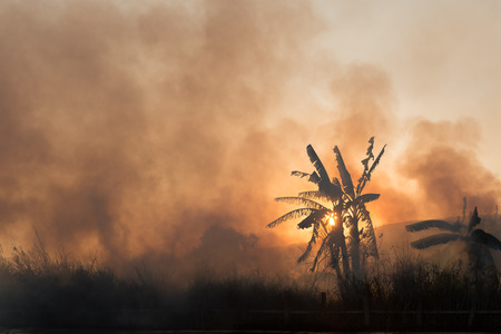 Fire and smoke on tropical fields and gardens on sunset photo