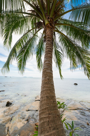 Tropical coconut palm and sea with blue sky  photo
