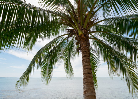 Tropical coconut palm and sea  photo