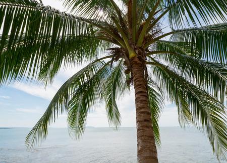 Tropical coconut palm and sea  photo