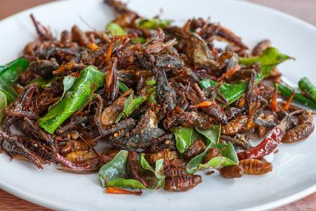 regional: Insectos comestibles fritos se mezclan en un plato blanco con hojas verdes de la cal. Insectos fritos son comida regional manjares en Tailandia Foto de archivo
