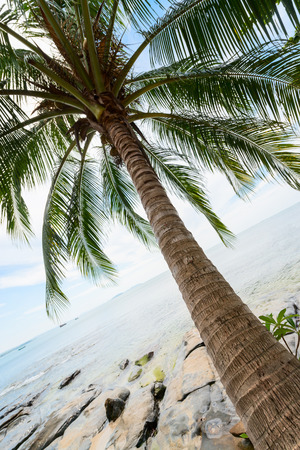 Tropical coconut palm and sea with blue sky on background photo
