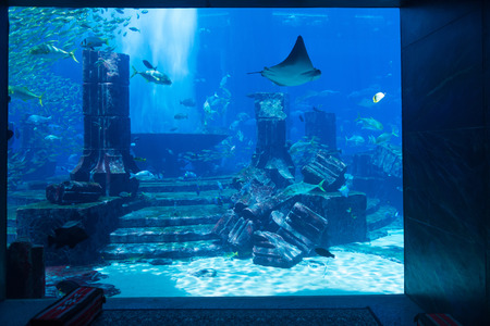 public aquarium: Beautiful public aquarium display of large saltwater fish with Atlantis themed decorations, including artificial building ruins with crumbling columns and ancient-looking stone steps.