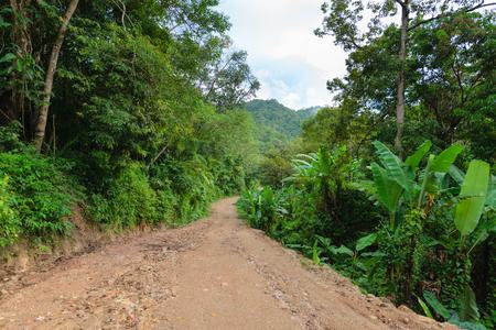 sun lit: Deserted sun lit dirt road through the jungle wilderness