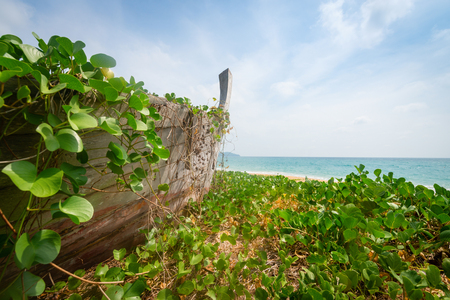 unkempt: Wreck of old abandoned wooden boat covered by tropical plants on deserted beach under blue sky