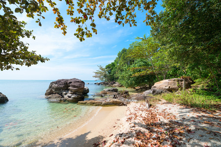 stoney: Picturesque tropical coastline with leaves on the sand and a boulder in the ocean
