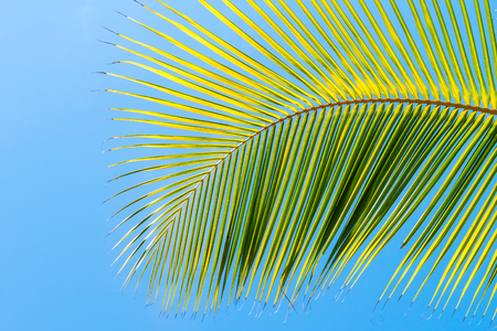 Palm tree leaf frond on blue clean sky background at tropical climate Stock Photo