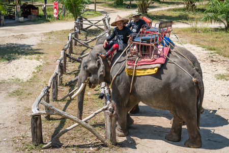 drover: KAO LAK, THAILAND - 24  FEB 2017: Elephants and their trainers in a camp are waiting for tourists