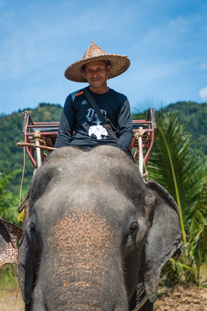 drover: KAO LAK, THAILAND - 24  FEB 2017: Asian elephant and their trainer in a camp are waiting for tourists