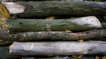 Heap of long wooden logs stacked horizontally close-up.