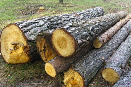Heap of long wooden logs stacked horizontally close-up in the forest. Stock Photo