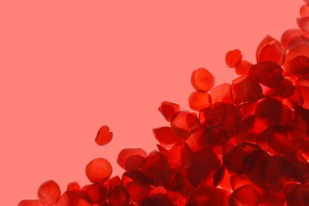 Red coral pink rose petals pattern on trendy coral background, isolated. Flat lay, top view, copy space. Valentines day, party, wedding, holiday, romance beauty concept.