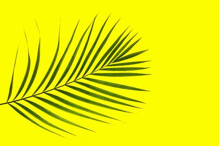 Tropical green palm leaf on yellow background. Minimal nature summer concept. Top view, flat lay, copy space.