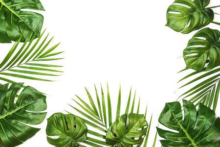 Tropische Blätter Monstera und Palme isoliert, Schweizer Käsepflanze, isoliert auf weißem Hintergrund. Flache Lage, Ansicht von oben.