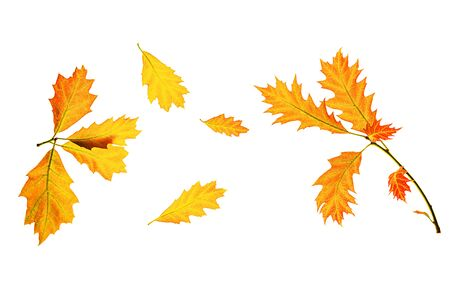 Autumn composition made of yellow red leaves on white background, isolated. Autumn, fall concept. Flat lay, top view, copy space.