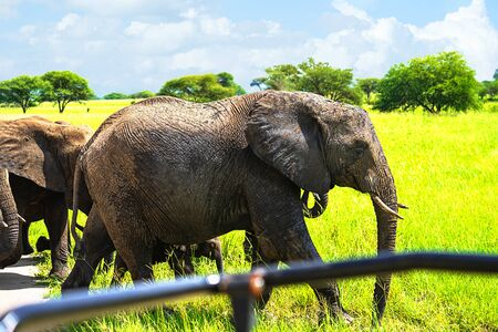Tourists in all-terrain vehicle exploring the elephants in safari game drive.