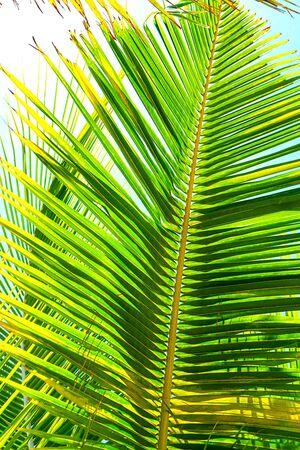 Coconut palm trees beautiful tropical background. Summer concept. Africa, island Zanzibar.
