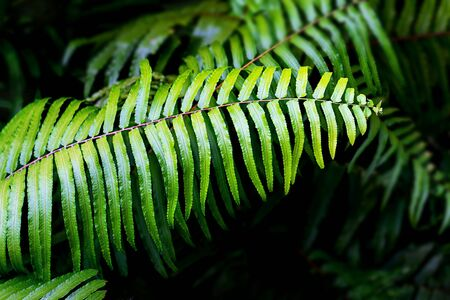 Natural fern pattern. Tropical green fern leaves background. Close up.