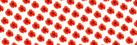 Pattern made of poppy flower on white background, isolated. Natural beauty concept. Close up, flat lay.