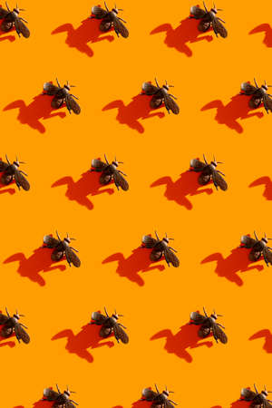 Halloween minimal pattern made of fly and shadow on orange background. Autumn holiday fun concept. 免版税图像